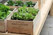 Edible Garden...