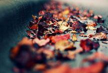 4 Saisons / de jolies photos de nos saisons