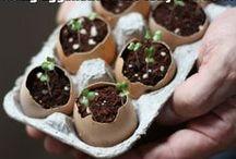 Growing a green thumb!! / by Muriah Bailey
