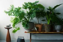 Outdoor spaces, pools and plants / by Jess Stewart
