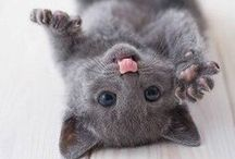 Adorable Animals / by Chrissy Elaine