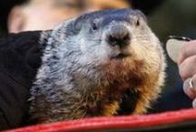 Groundhog Day Activities and Crafts / by Kathy P