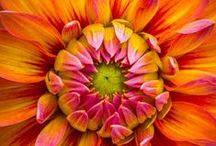 Flower Power / Favorite flower images and flowering plants
