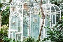Dream Greenhouse / My dream greenhouse