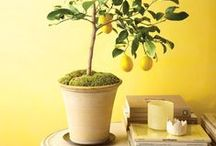 House Plants / Indoor plants, house plants, plants for the home.