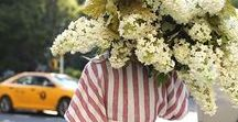 plants/flowers