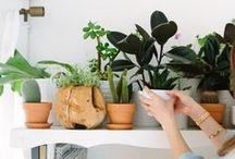 Plant Matters