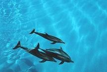 Spiagge bianche e acque turchesi / Il sole scalda la pelle, la mente trova pace e gli occhi si riempiono di blu. Al mare, per una pausa dalla vita quotidiana o dopo un viaggio itinerante. Ci sono le lunghe spiagge del Mozambico, le isole di Bazaruto e le Quirimbas. Oppure l'eden terrestre delle Seychelles e le baie della coloniale Mauritius. In Tanzania dolci isole che profumano di spezie. In Oman si nuota tra i fiordi di Zighy Bay o ci si rilassa a sud, all'ombra delle palme nella tropicale Salalah.