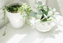 Garden & Grow