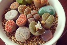 Succulents - how I love thee...