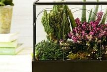 Outdoor Living Marketplace / Our green, south-end Marketplace is chock full of everything you need to keep a beautiful and adventurous yard, garden, or bring the outdoors in!
