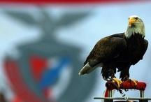 Eu sou Benfica