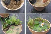 Outdoor/Gardening / by Free Stuff Finder
