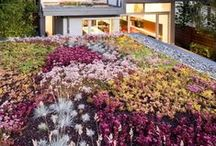 Green Roofs / Green roofs are a great way to add plants to an area that would otherwise be bare, plus they have added benefits like conversing energy, reduce air and noise pollution, and they create a habitat for butterflies and wildlife.