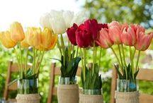 Spring Decor / by Williams-Sonoma