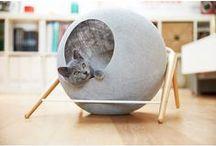 DESIGN FOR PETS / Even your beloved pets deserve good design.