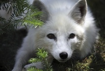 Nature / The most common animals we see are squirrels, chippies, raccoons, mice, deer and the occasional fox or opossum.  There are more around, but I see them most often in pictures.  To garden for nature check out http://www.gardeningwithjulie.com/gardening-for-nature.html