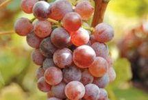 Greek wines & Varieties