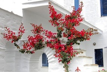 Bougainvilles / by Visit Greece