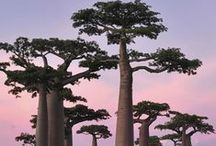 Madagascar / The destination that inspired Madagascar Orchid, a fragrance of jasmine, ylang dew, mimosa mood & pink peony.