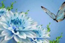 Beautiful blues / by Cindy Mitchell