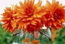 Orange / by Cindy Mitchell