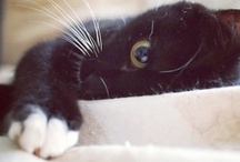 marlaine ♥ sweetness / animals that are unarguably sweet! / by little miss bliss