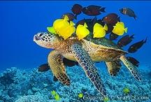 Ocean & Sea Life / by Jim Herbert