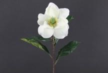 Magnolias - Permanent Botanicals