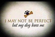 Pets I want!/Pet Stuff / by Vanessa Garcia-Bower