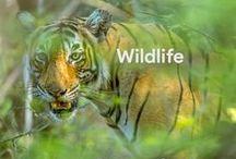 Wildlife / Capturing them in the wild!