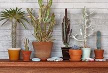 Indoor Plants / by Nat Clave