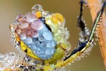 Arthropods / by Bernard Ryefield