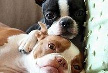 puppy love / by Michele VanOrden