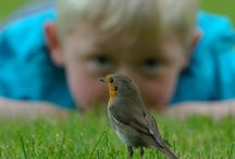 Birding With Kids / A great place to learn about birds, birding, and birding activities for kids and families. Pin your favorite bird photos and birding activity ideas here! / by Tori Martinez