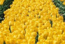 Yellow / Yes! ... Yellow! / by Tori Martinez