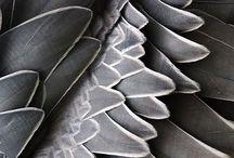Grey / Gorgeous Grey / by Tori Martinez
