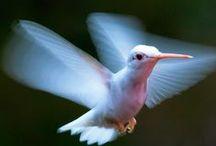 Hummingbirds / by Jim Herbert