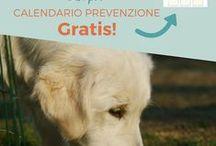 Cani - Consigli | Dogs - Tips & Tricks / consigli e cose da sapere sui cani