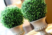 Topiary Inspirations