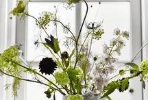 fowl and flora / by jessica colaluca / design seeds