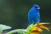 Birds / Birds make me sing...