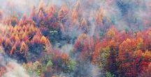 Rosy seasons - Autumn