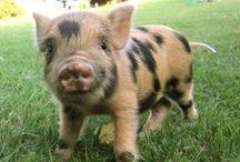 Piggies / by yarnpiggy