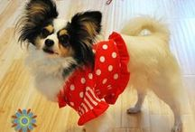 All Things For Small Dogs / Anything and Everything for your Tiny Best Friend! / by Stitchwerx Designs