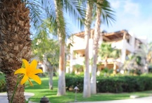 A Sunny Day in Cabo / Soak in all the beauty of these flowers & plants that can be found all over our Cabo San Lucas Resort / by Esperanza Resort