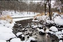 Winter Beauty / Winter is a long season for me.  Here is where I pin things that delight and surprise, even though it's cold outside. / by Christine Anne