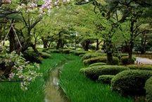 Beautiful Garden / by SoYoung