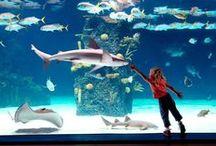 Under the Sea - Newport Aquarium