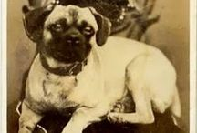 Vintage DOG photos -2 / I love collecting old photos with Dogs...I love the stories they tell. / by Denise Thompson